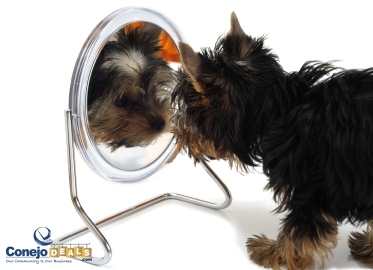 $19 for Complete Dog Grooming Including Bath, Brush, Nail Clipping and More at Doggy Salon in Simi Valley (Value $40-$60)