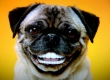 Dog Dental Cleaning Including Anesthesia and Pre-Anesthetic Blood Work at Townsgate Pet Hospital Just $199 (Value $499)